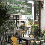 Rainforest Guest House